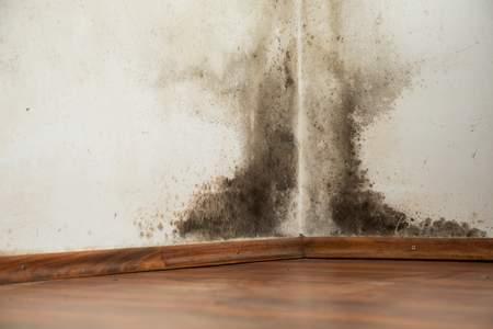עובש בדירה